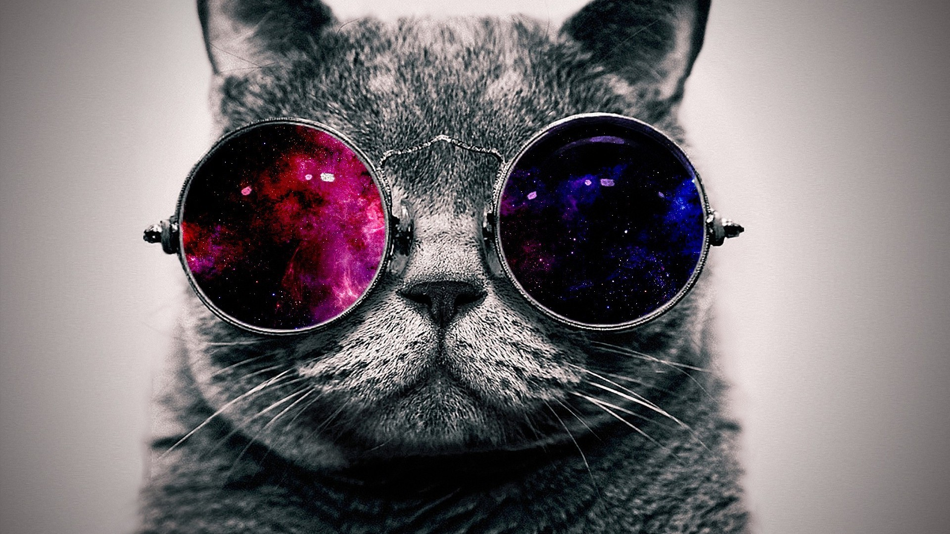 cat with cosmos glasses wallpaper