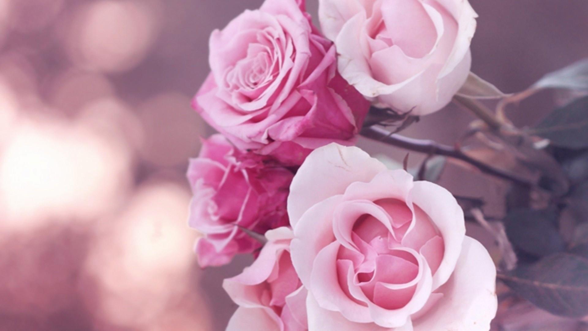 pink roses fond ecran hd