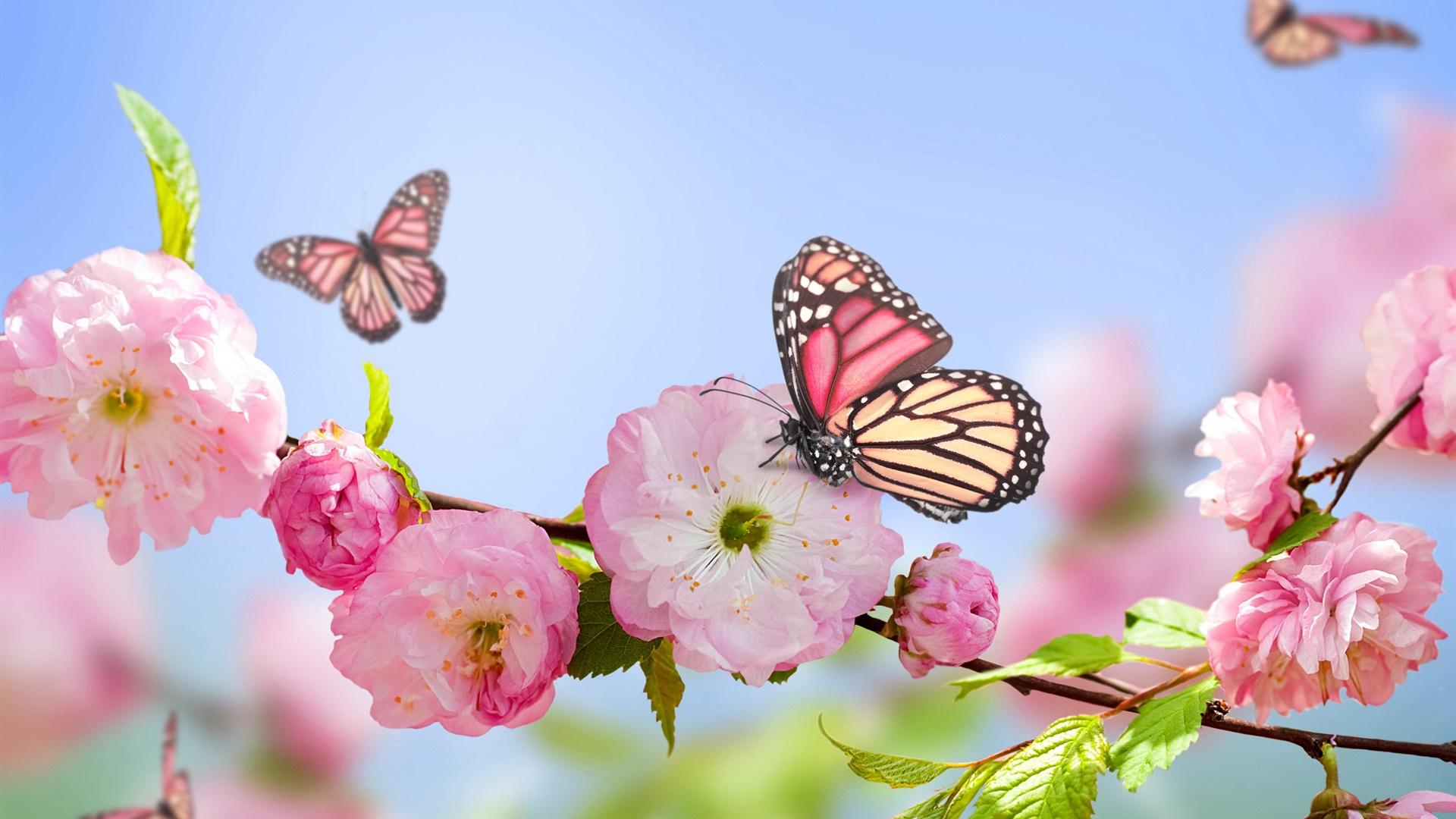 roses, papillons, ciel bleu fonds d'écran x fonds d'écran