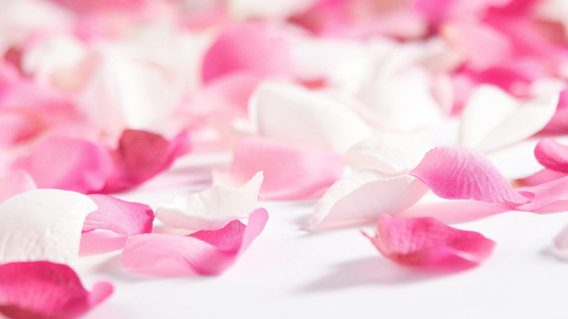 Wallpaper Rose Hd Gratuit A Telecharger Sur Ngn Mag