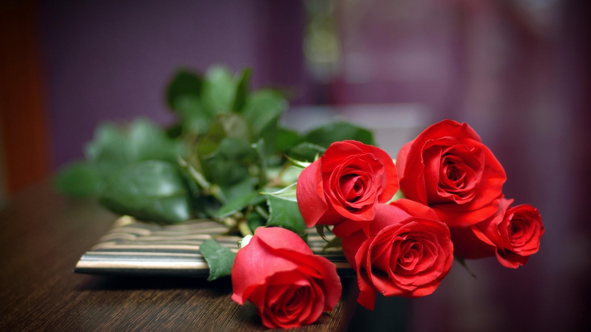, rose, flower, desktop, awesome, windows, photos fond ecran hd