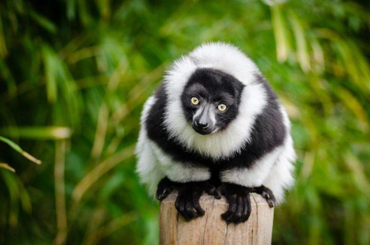 andasibe-parc-lemurien