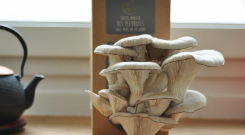 Faire pousser des champignons en vue d'une grande occasion
