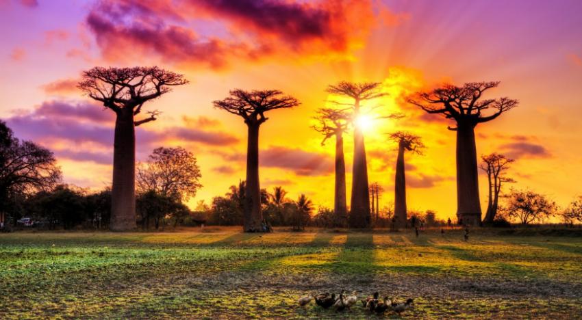 Voyage à Madagascar : ai-je besoin d'un visa ?