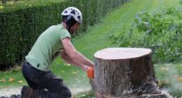 Comment et quand élaguer un arbre ?